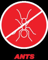 ants-h