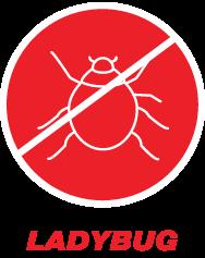 ladybug-h